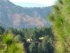 Park Woods, Shoghi, Himachal Pradesh